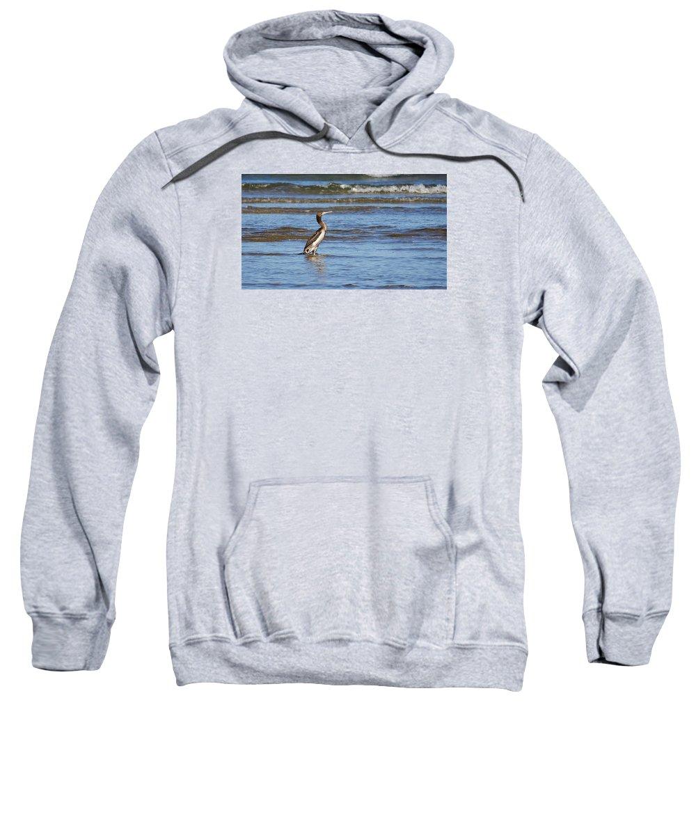 Jouko Lehto Sweatshirt featuring the photograph Socotra Cormorant by Jouko Lehto