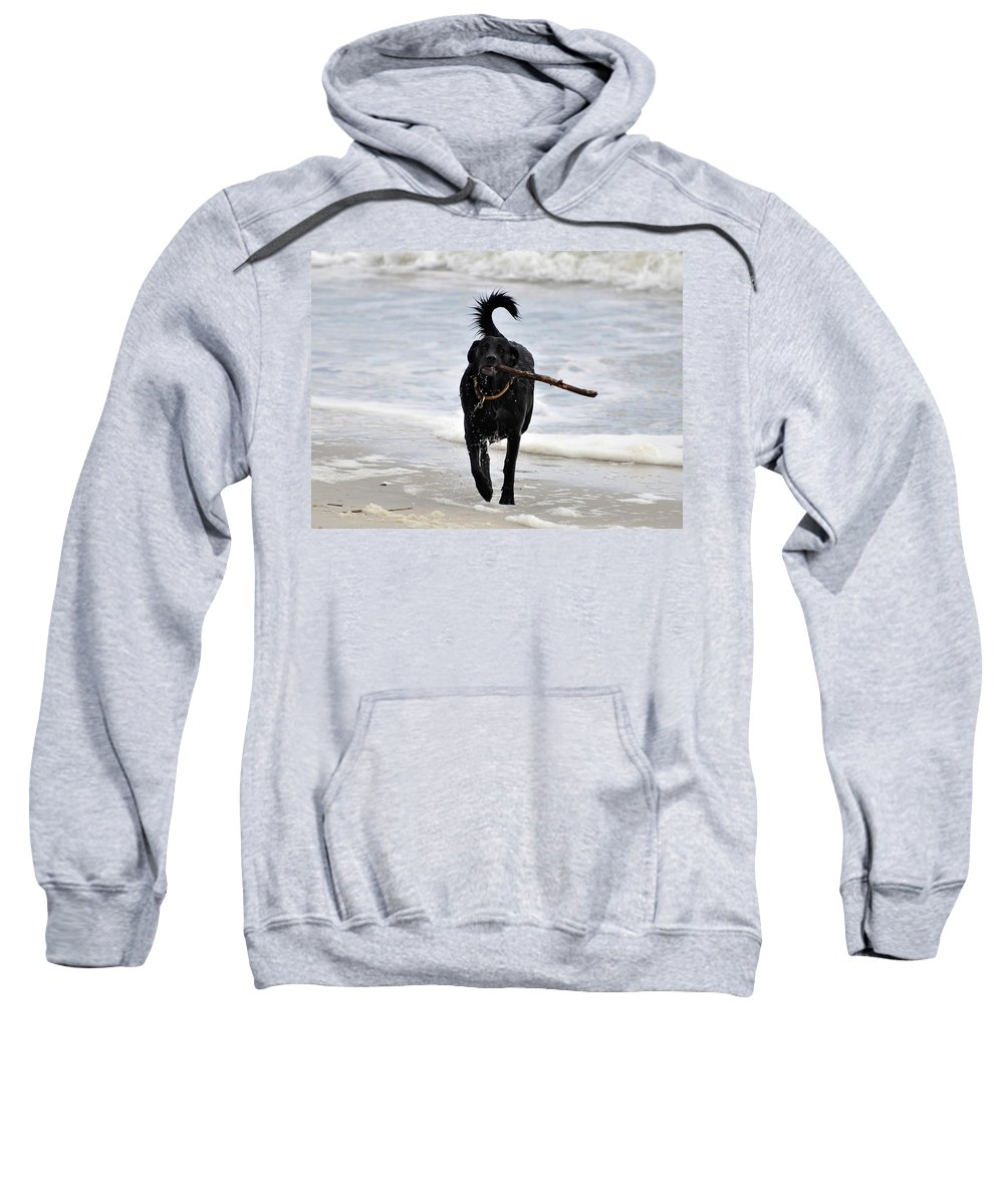 Dog Sweatshirt featuring the photograph Soggy Stick by Al Powell Photography USA