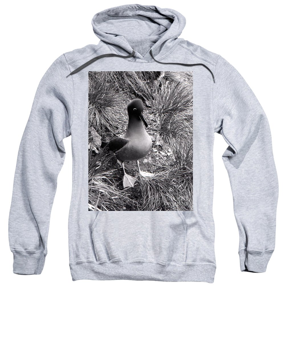 Albatross Sweatshirt featuring the photograph Sooty Albatross On A South Georgia Cliffside by Wilf Doyle