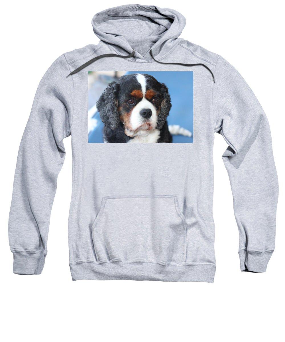 Dog King Charles Cavalier Spaniel Sweatshirt featuring the photograph Spaniel by Lynsey Au lait