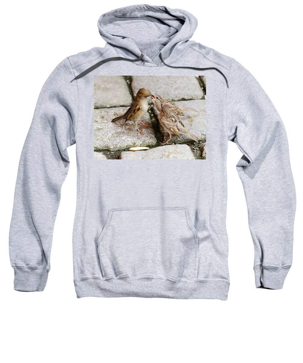 Sparrow Sweatshirt featuring the photograph Sparrow Feeding Fledgelings by Peter Hermes Furian