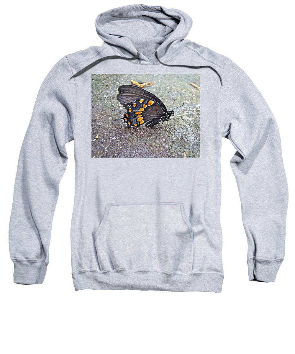 Butterfly Sweatshirt featuring the photograph Spicebush Swallowtail Butterfly Female - Papilio Troilus Troilus by Mother Nature
