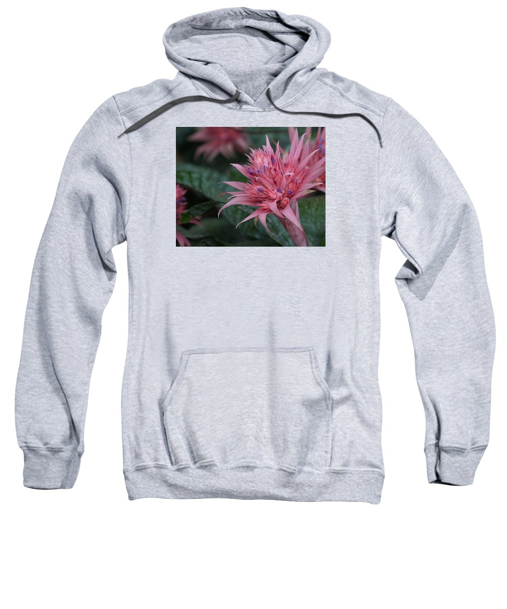 Ann Keisling Sweatshirt featuring the photograph Spiky Pink by Ann Keisling