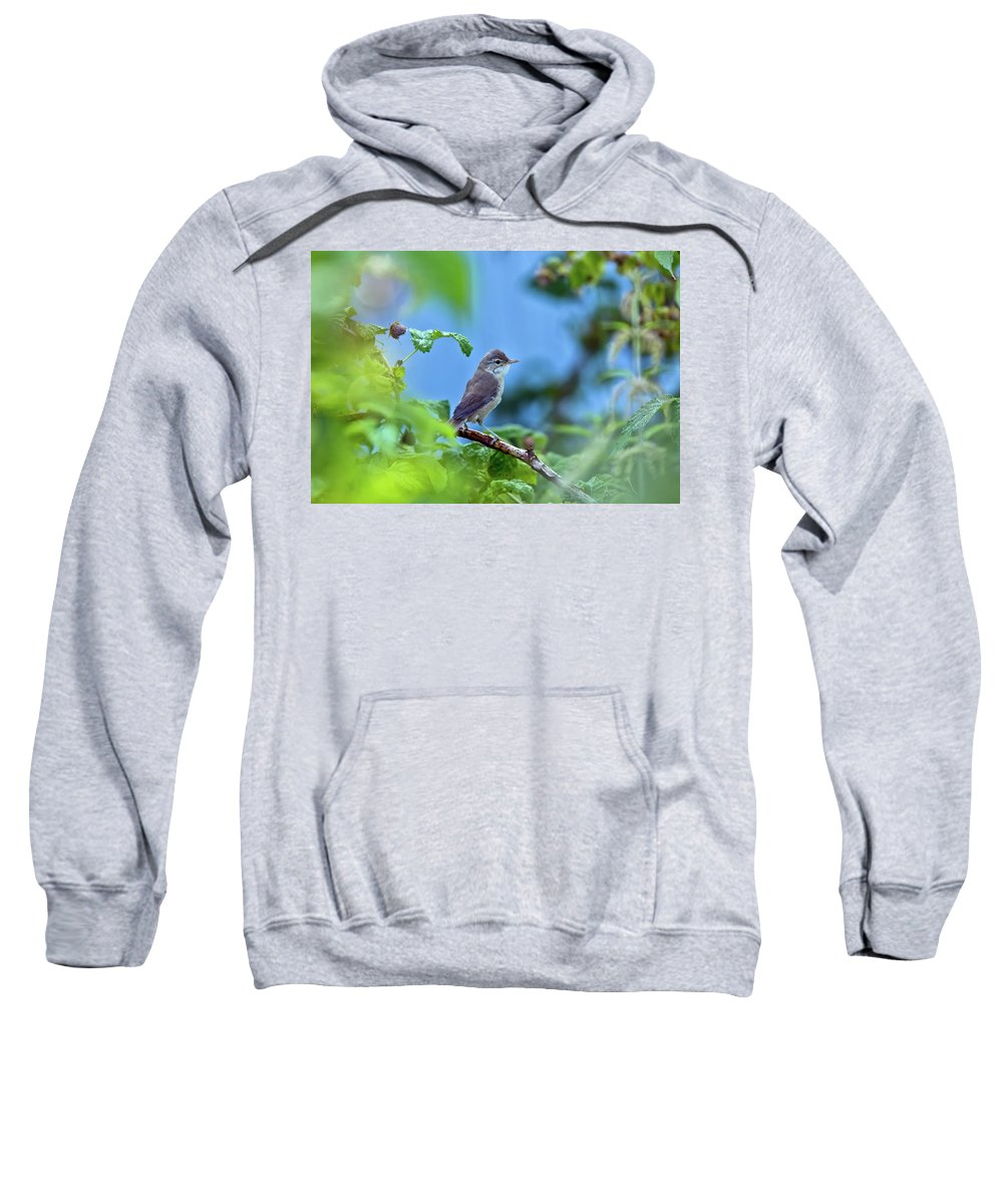 Bird Sweatshirt featuring the photograph Spotted Flycatcher Muscicapa Striata . by Oksana Ariskina