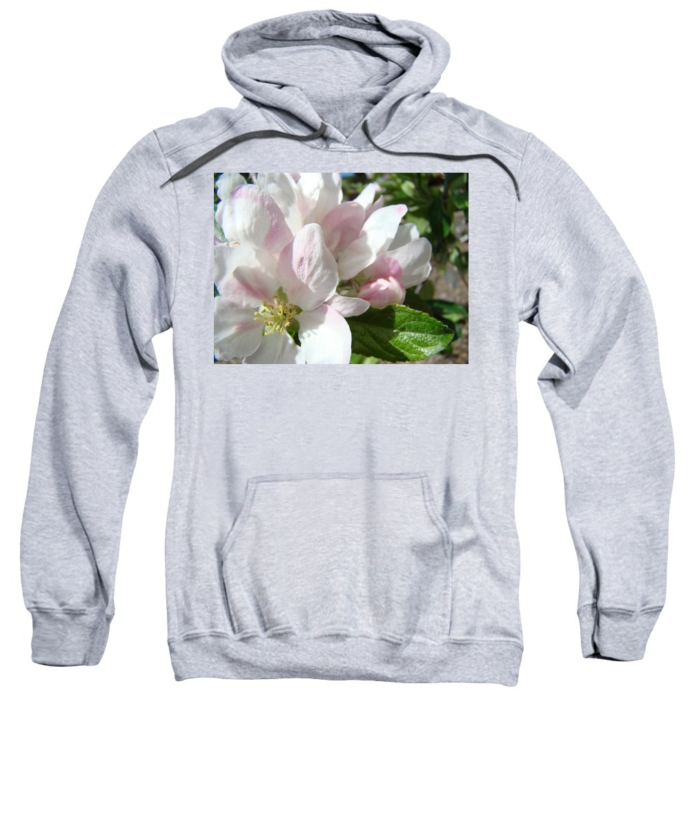 Apple Sweatshirt featuring the photograph Spring Apple Blossoms Art Prints Apple Tree Baslee Troutman by Baslee Troutman