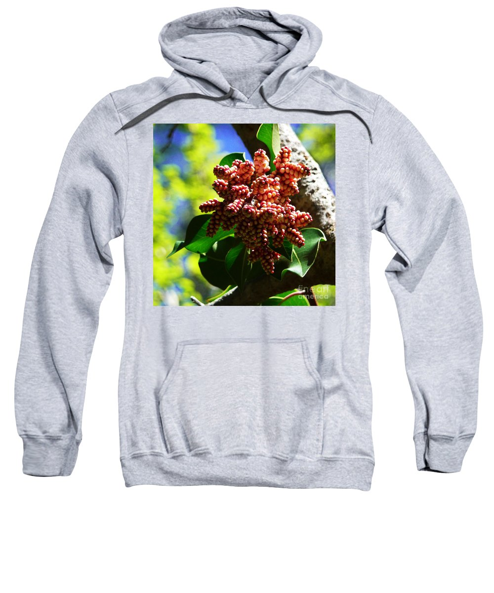 Sea Grapes Sweatshirt featuring the photograph Spring Blossom 1 by Xueling Zou