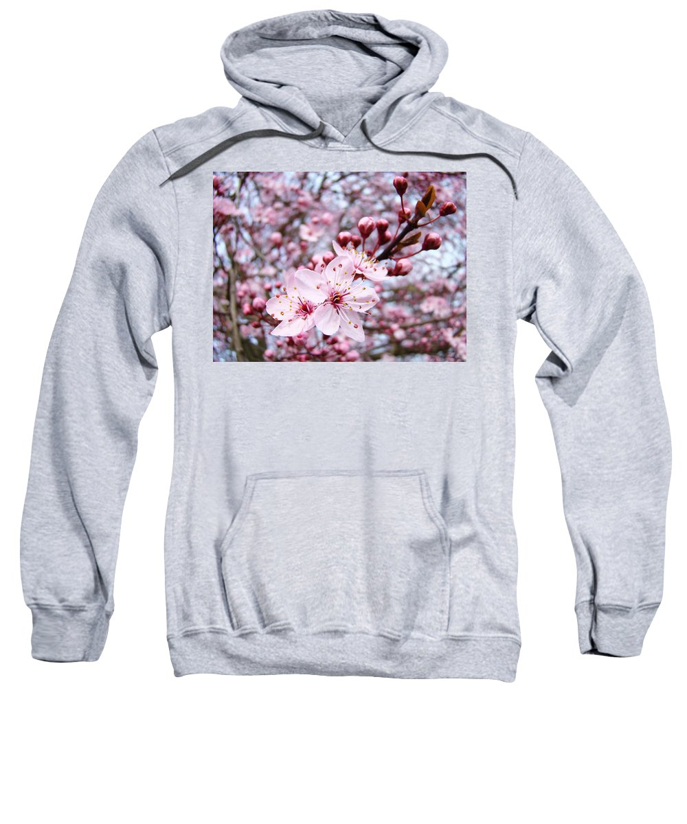 Blossom Sweatshirt featuring the photograph Spring Blossoms Art Pink Tree Blossom Baslee Troutman by Baslee Troutman