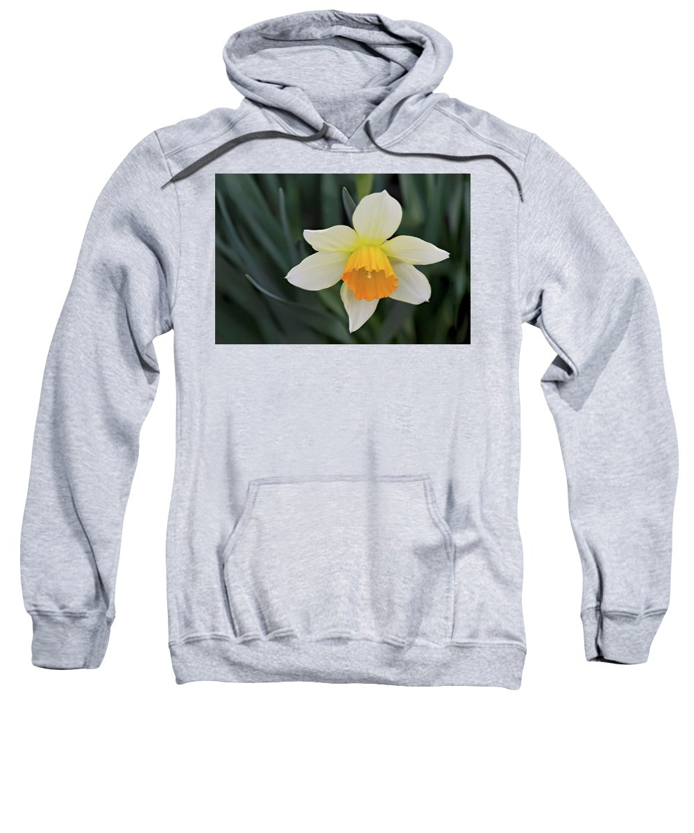 Daffodil Sweatshirt featuring the photograph Spring Bow by Janet Daniel