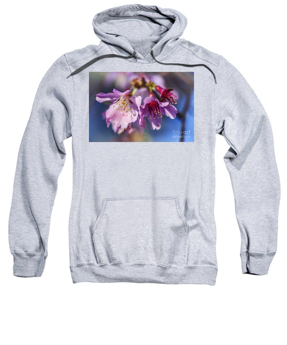 Tree Sweatshirt featuring the photograph Spring Burst by Korrine Holt