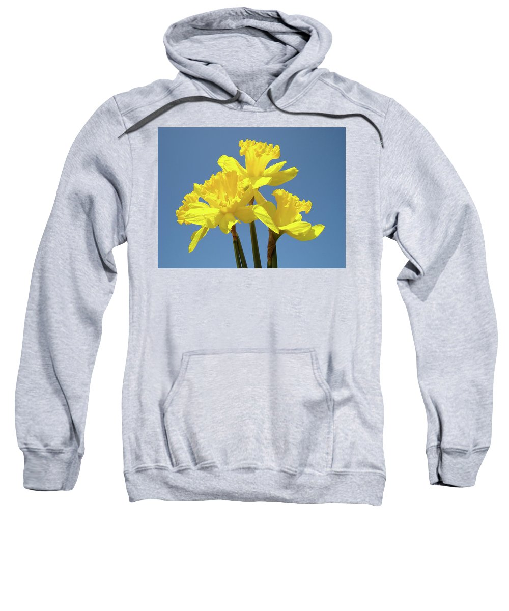 Daffodils Sweatshirt featuring the photograph Spring Daffodil Flowers Art Prints Canvas Framed Baslee Troutman by Baslee Troutman