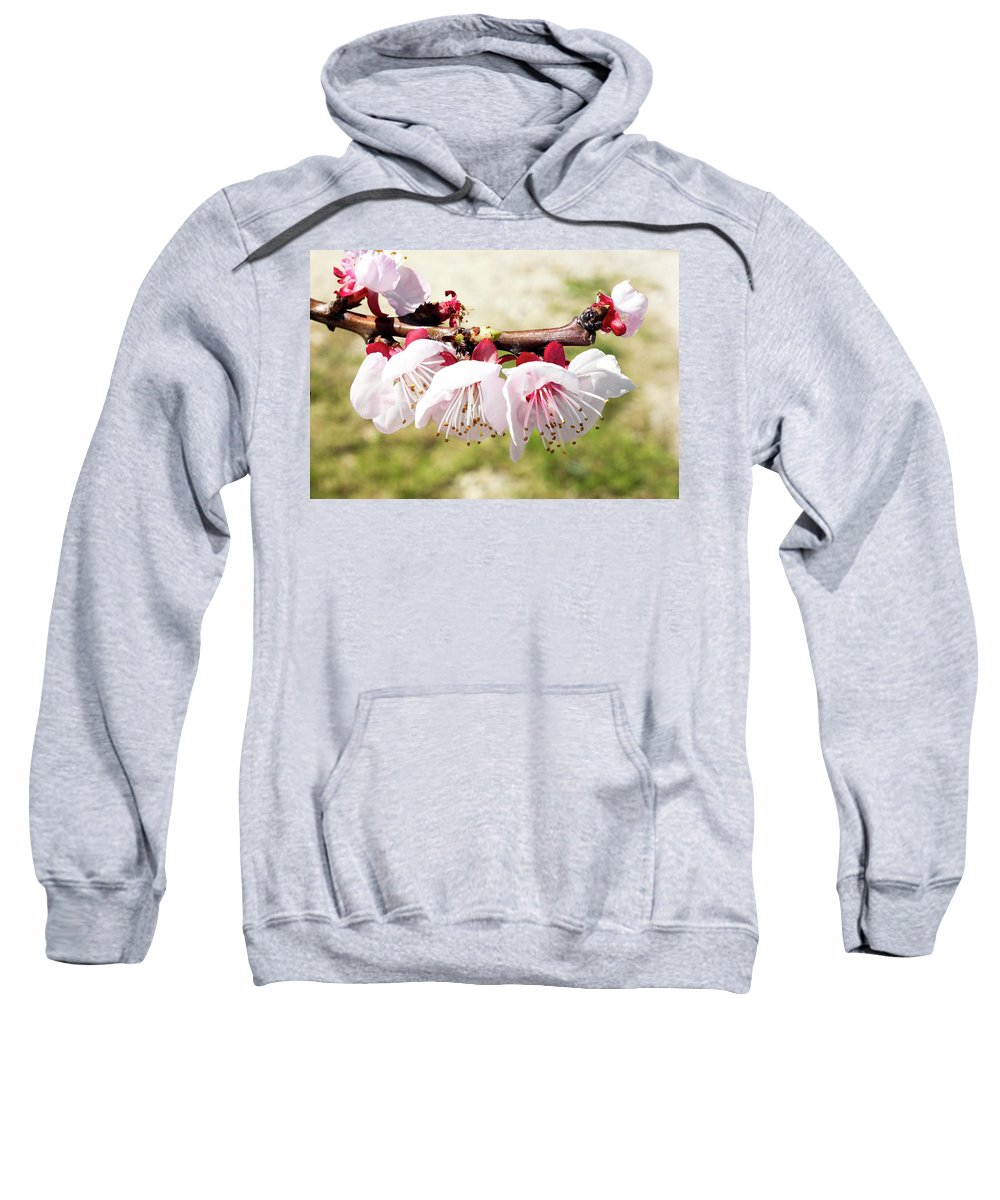 Sweatshirt featuring the photograph Peach Flowers by Vesna Grgurevic