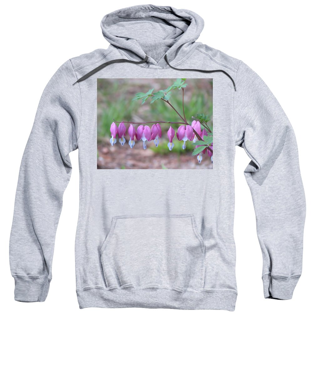 Bleeding Hearts Sweatshirt featuring the photograph Spring Hearts by MTBobbins Photography
