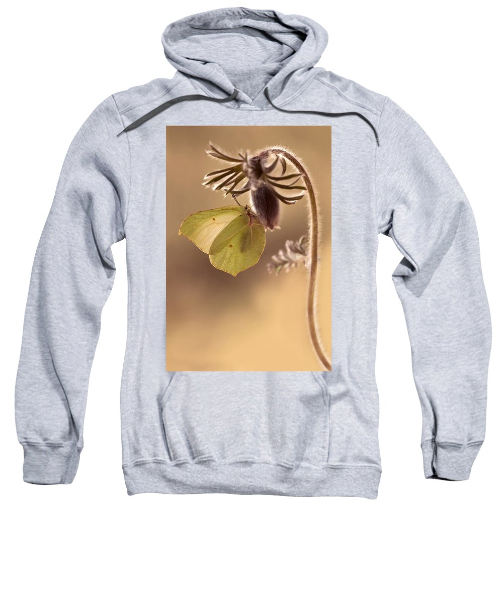 Butterfly Sweatshirt featuring the photograph Spring Impression With Pasque Flower by Jaroslaw Blaminsky