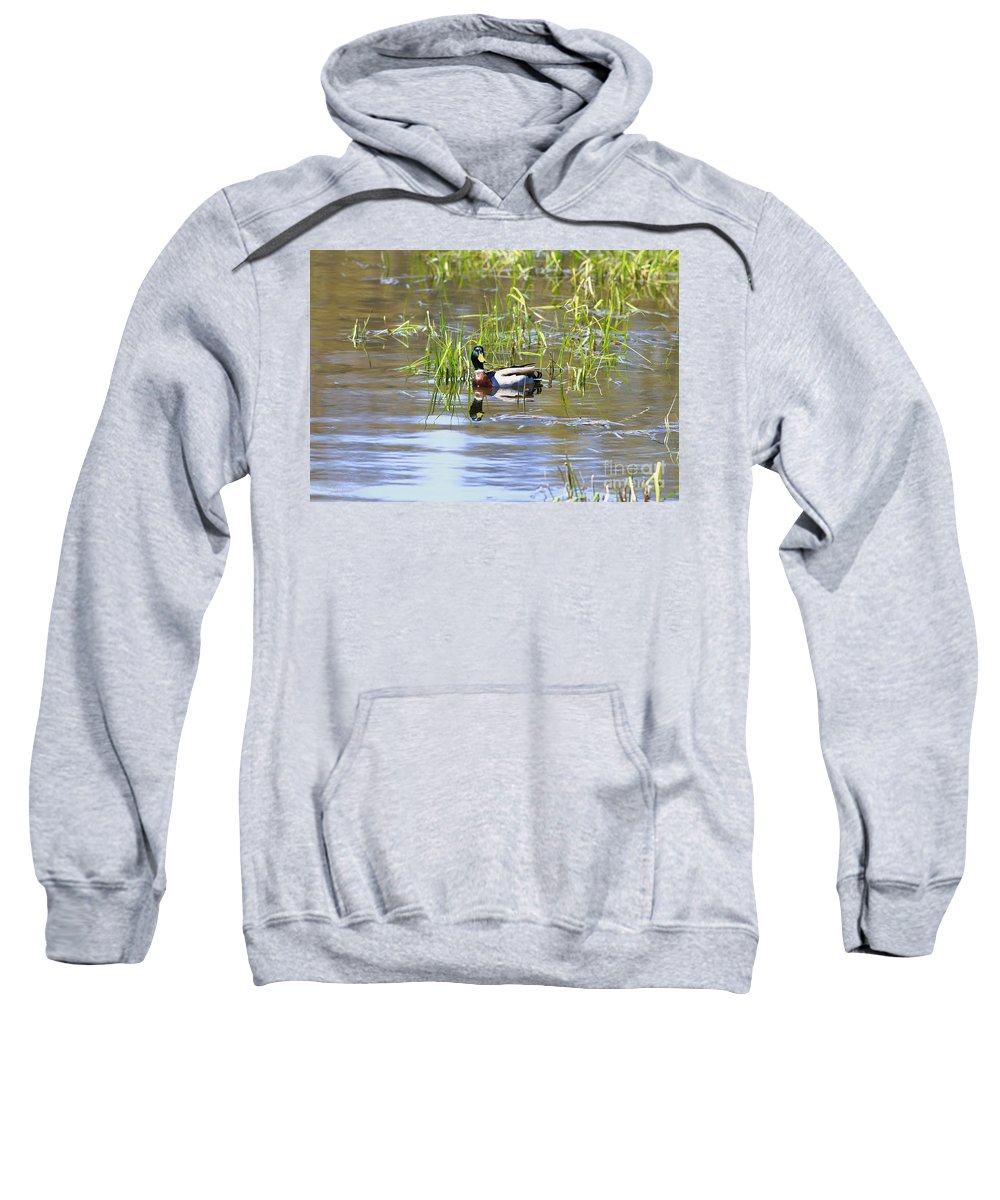Bird Sweatshirt featuring the photograph Spring Mallard 2010 by Deborah Benoit