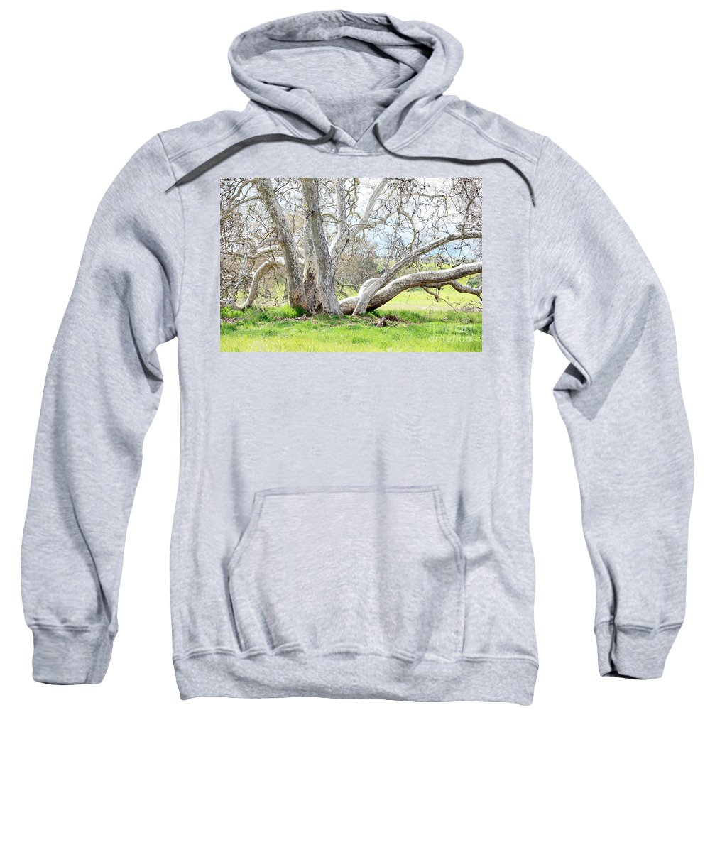 Sycamore Tree Sweatshirt featuring the photograph Spring Sycamore Tree by Carol Groenen