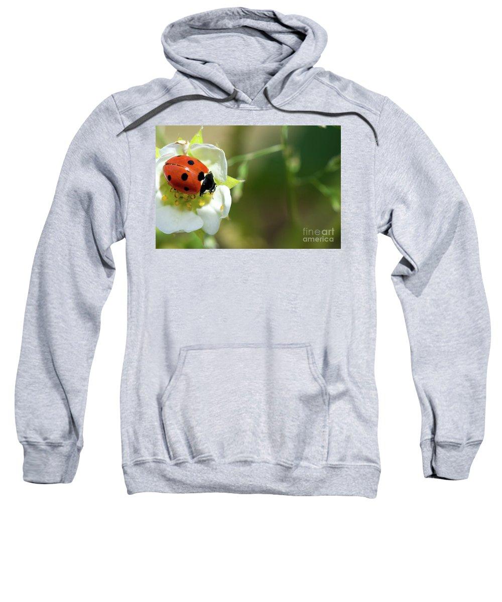 Closeup Sweatshirt featuring the photograph Springtime - Animals by PhotoGranary