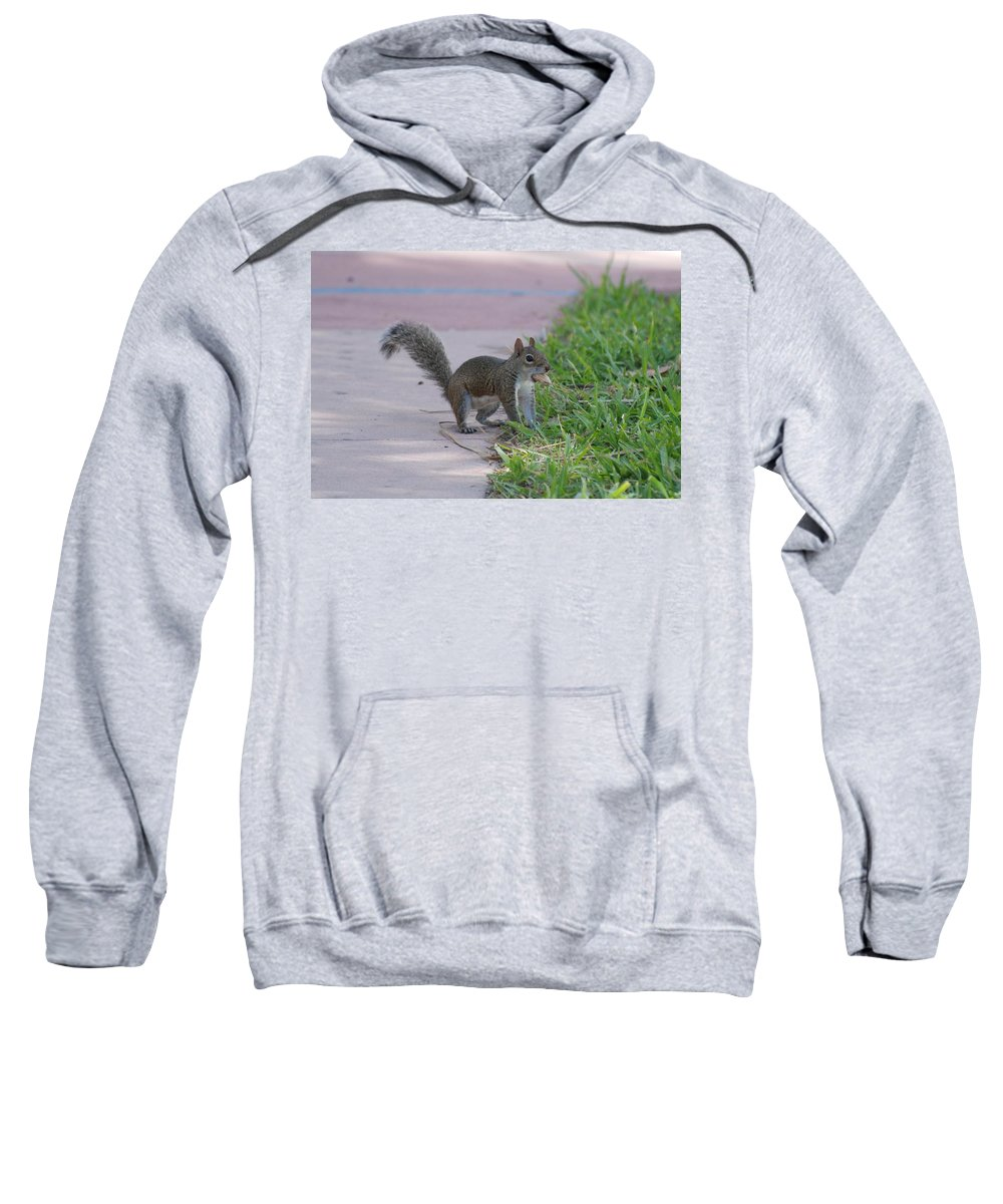 Squirrels Sweatshirt featuring the photograph Squirrel Nuts by Rob Hans