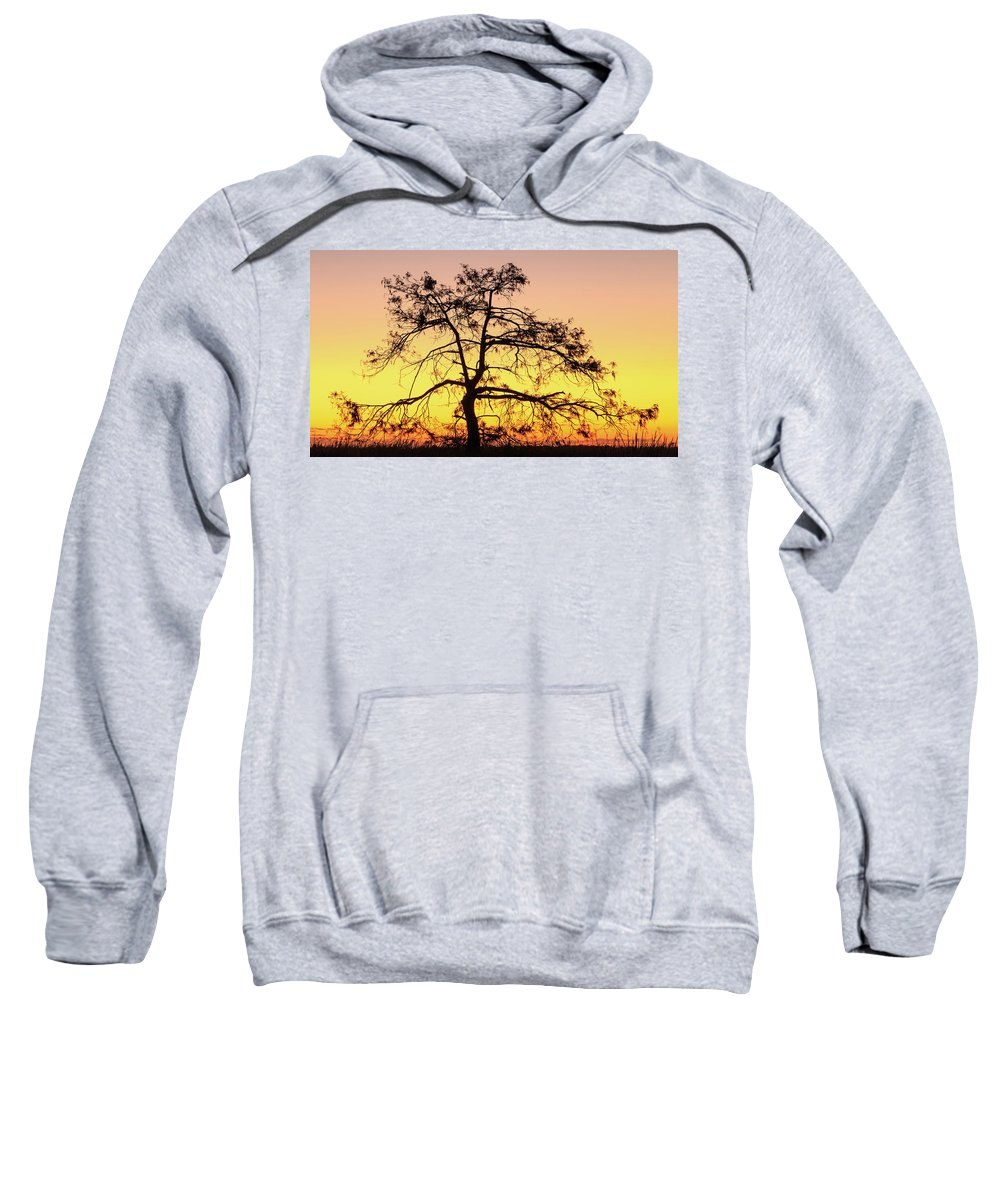 Florida Sweatshirt featuring the photograph St Johns River Tree by Stefan Mazzola
