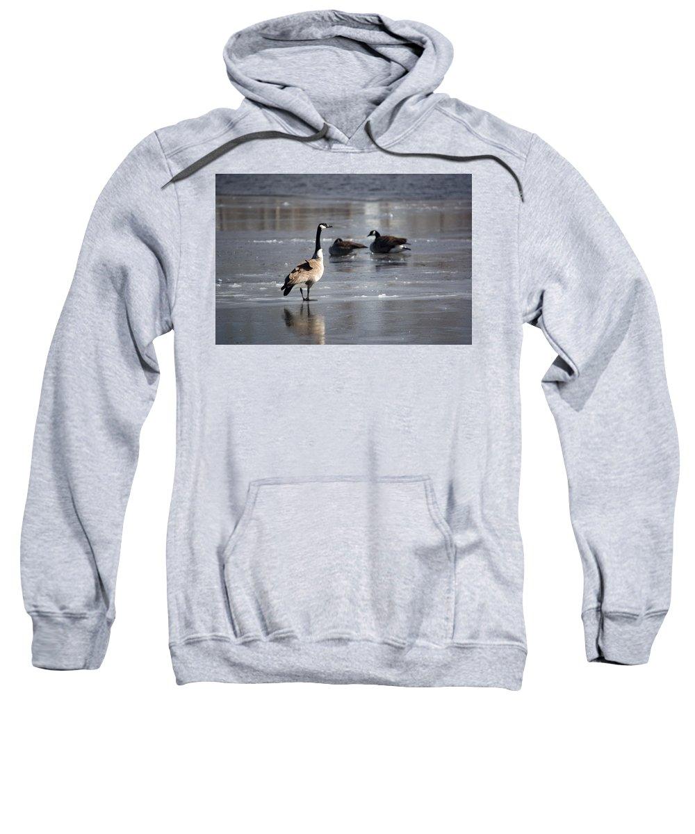 Swan Sweatshirt featuring the photograph Stand Straight by Linda Kerkau