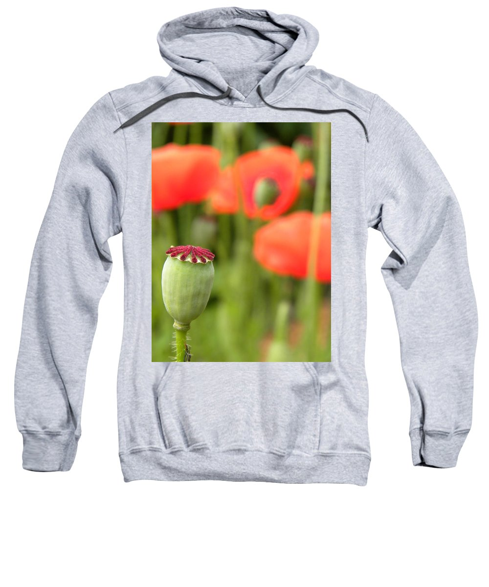 Poppy Sweatshirt featuring the photograph Standing Alone by Peggy McDonald