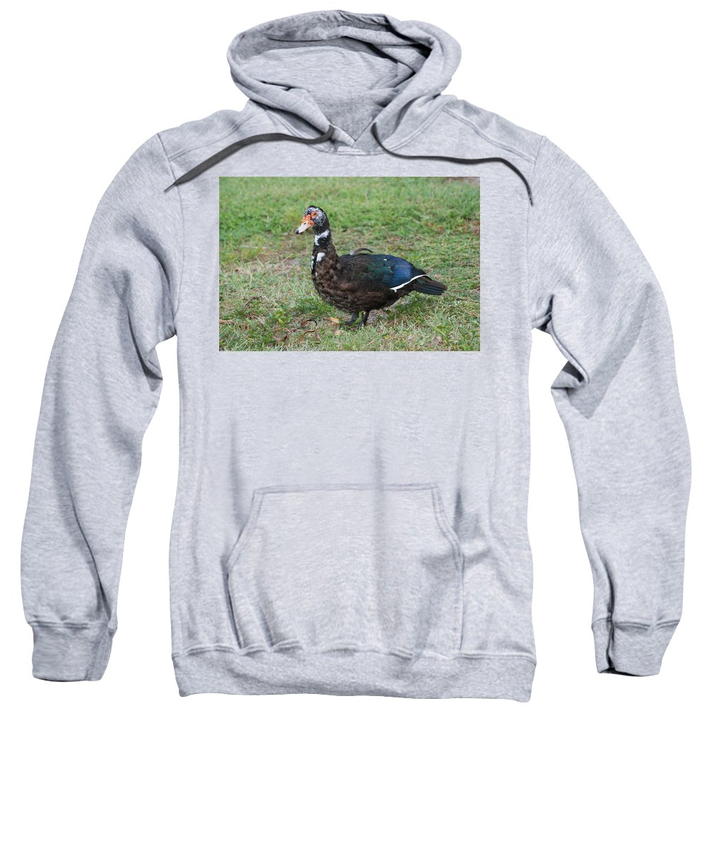 Ducks Sweatshirt featuring the photograph Standing Duck by Rob Hans
