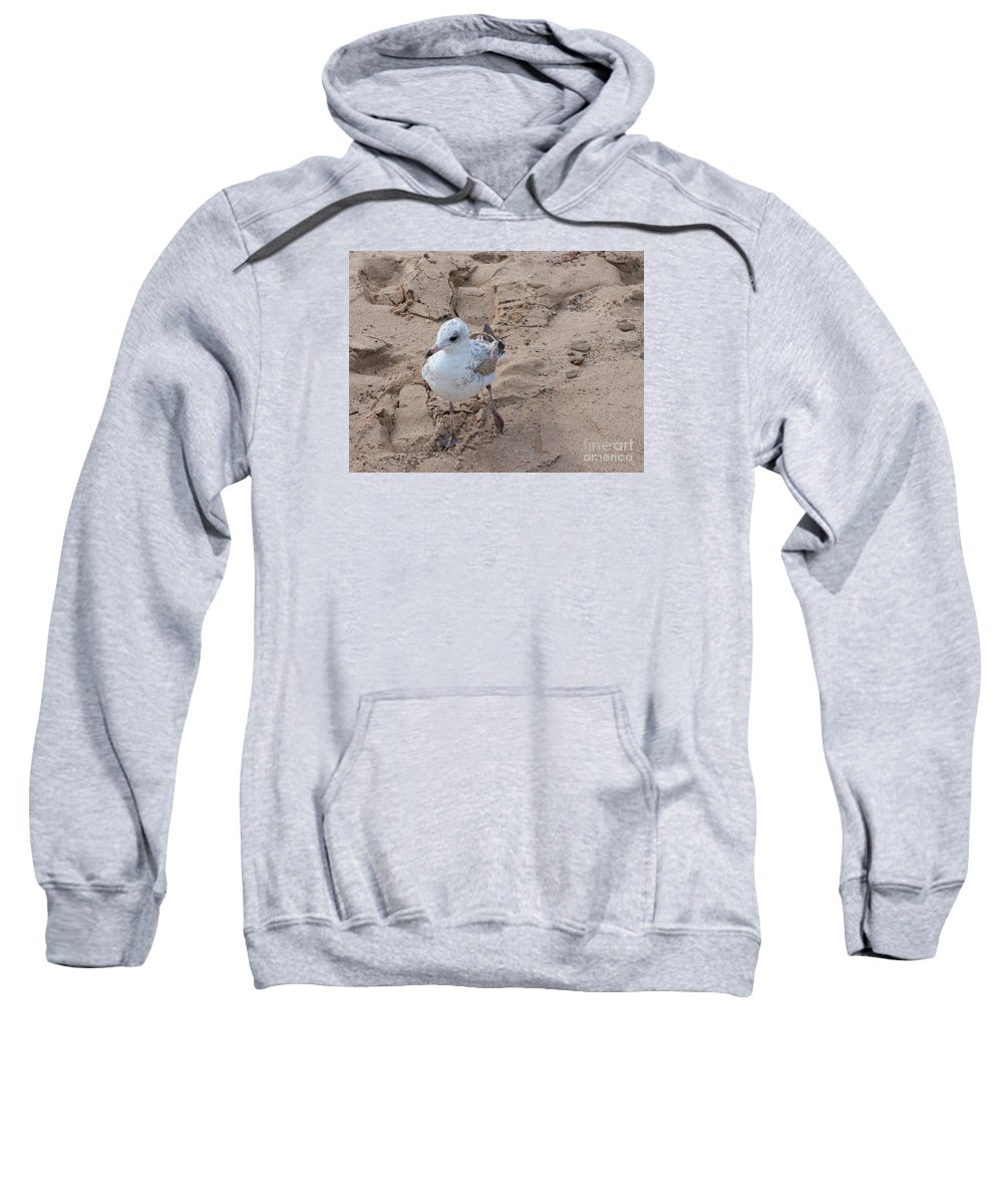 Gull Sweatshirt featuring the photograph Step Right Up by Ann Horn