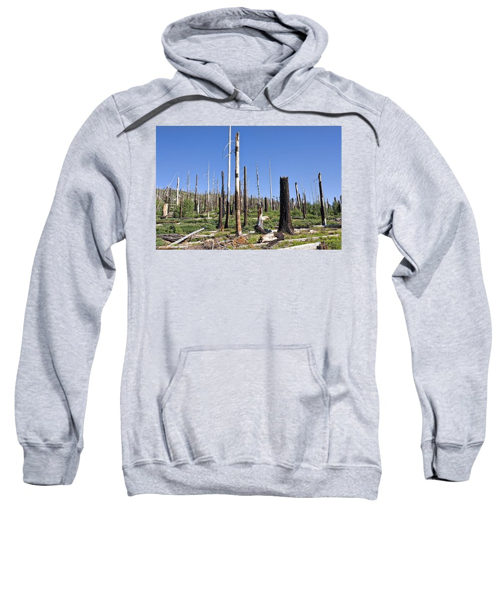 Dead Trees Sweatshirt featuring the photograph Sticks by Kelley King