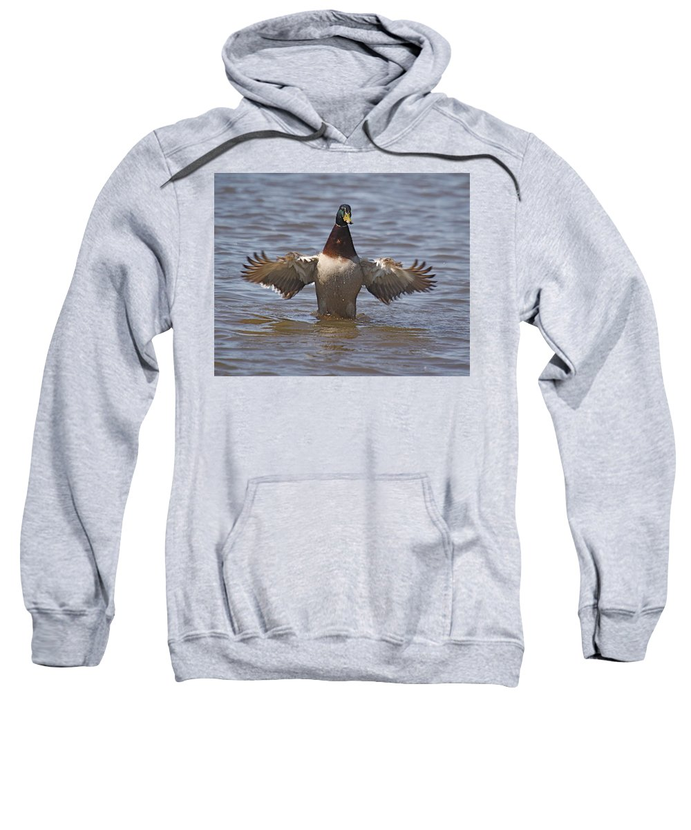 Duck Sweatshirt featuring the photograph Stretch 2 by Robert Pearson