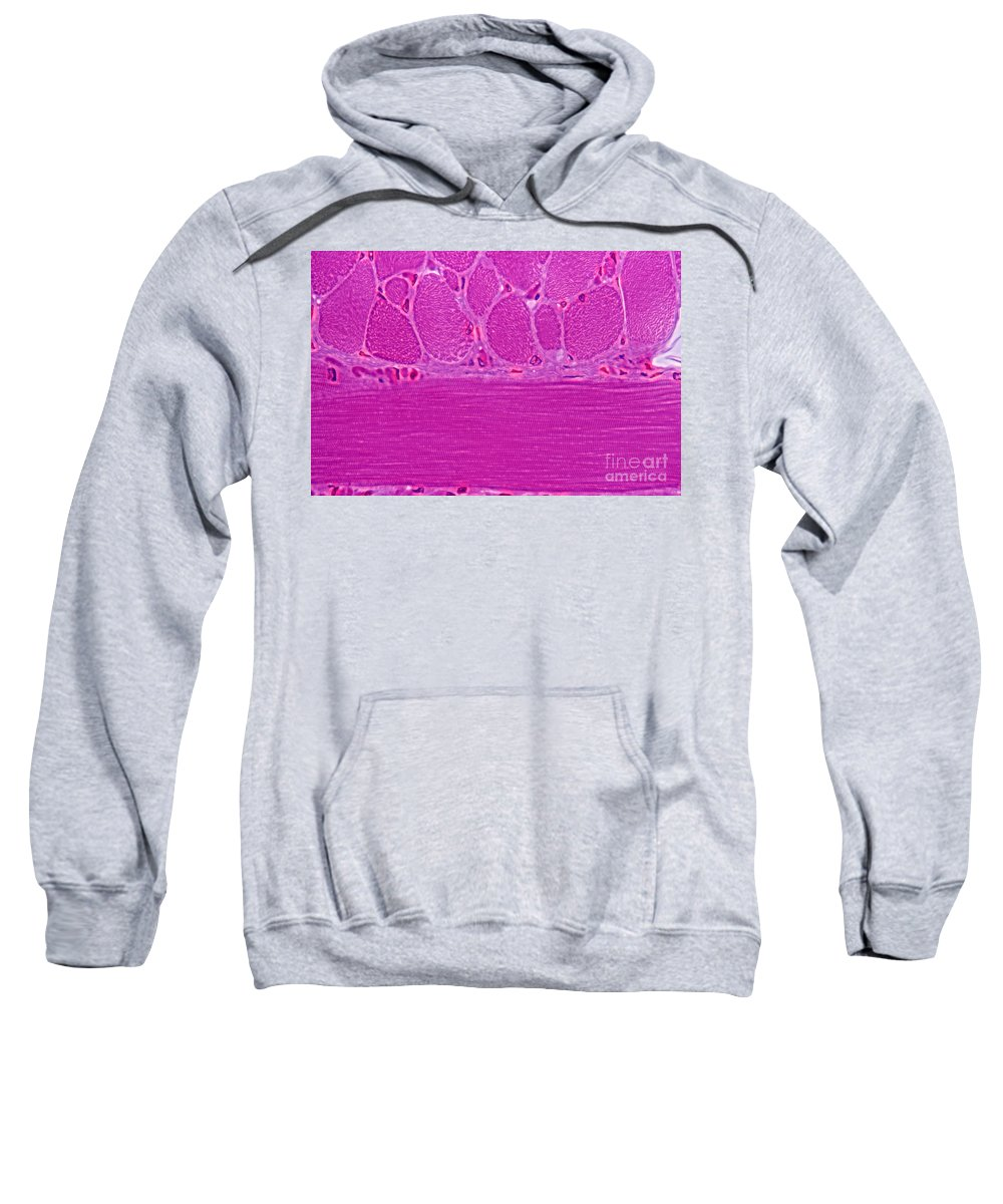 Light Microscopy Sweatshirt featuring the photograph Striated Muscle by M. I. Walker
