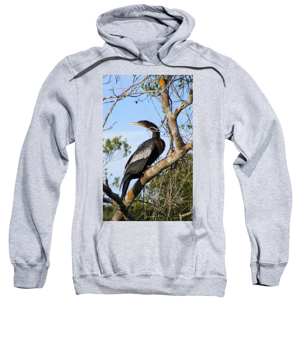 Bird Sweatshirt featuring the photograph Strike A Pose by Ed Smith