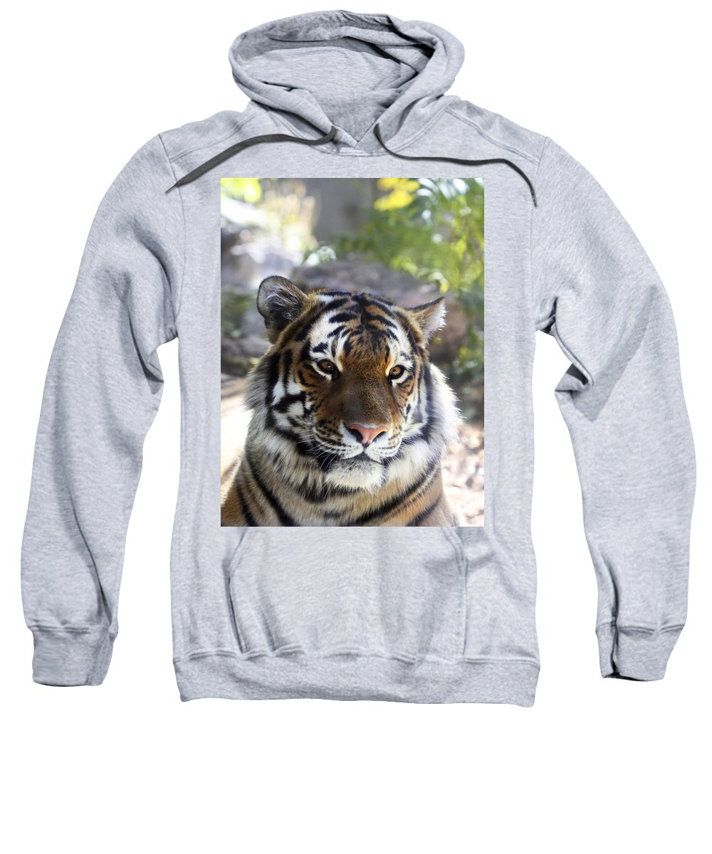 Animal Sweatshirt featuring the photograph Striped Beauty by Marilyn Hunt