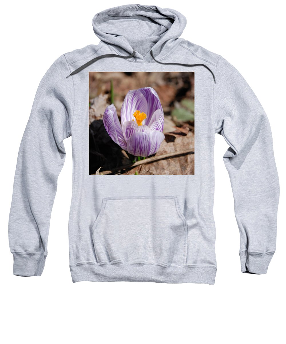 Digital Photography Sweatshirt featuring the photograph Striped Crocus by David Lane
