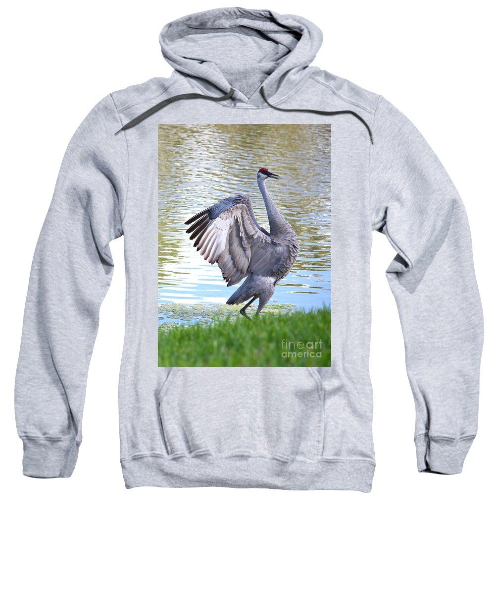 Sandhill Crane Sweatshirt featuring the photograph Strutting Sandhill Crane by Carol Groenen