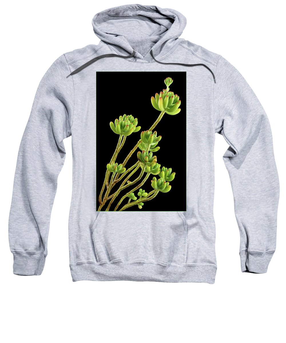 Succulent Sweatshirt featuring the photograph Succulent by Suzanne Morshead