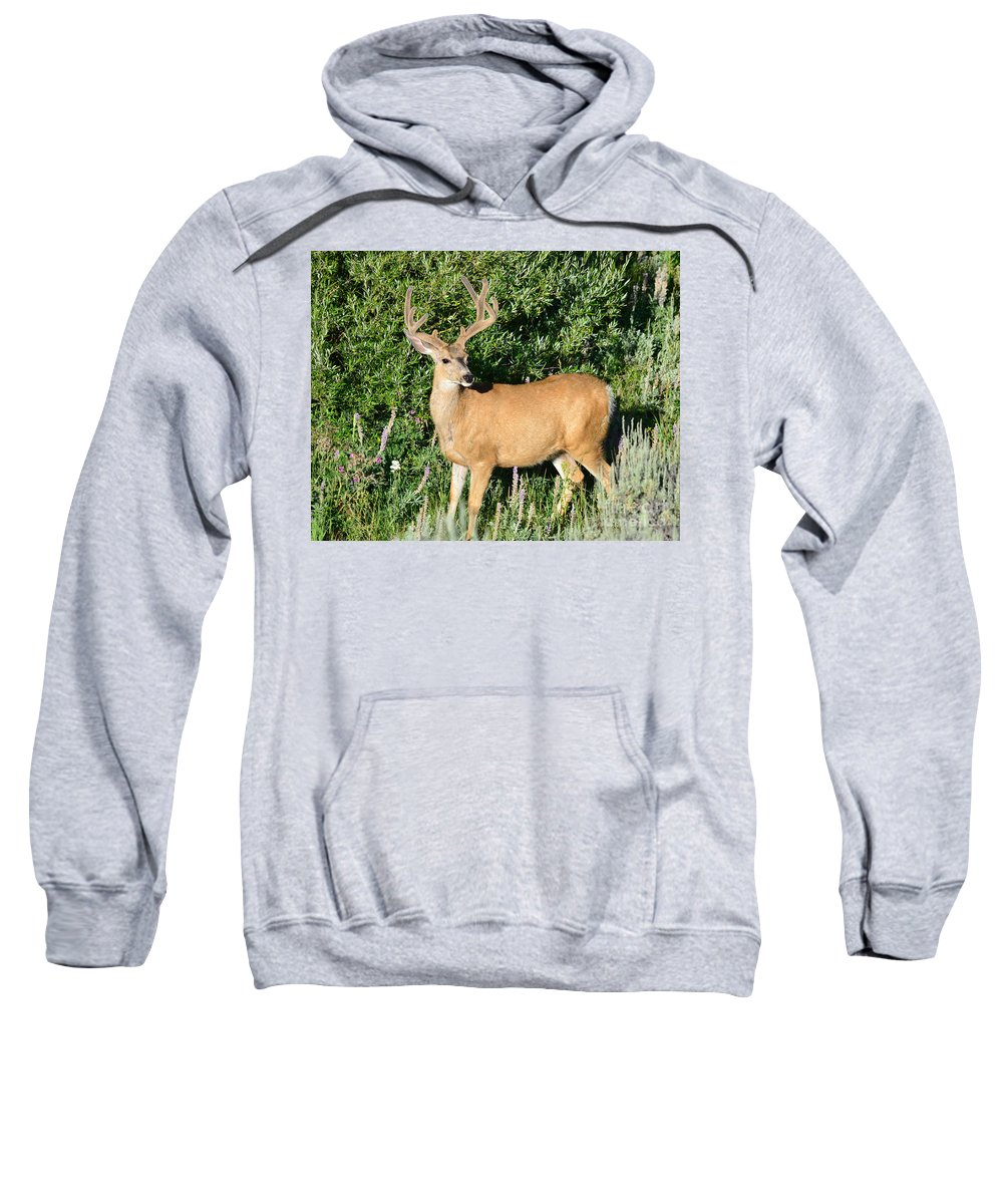 Mule Sweatshirt featuring the photograph Summer Buck by Brad Christensen