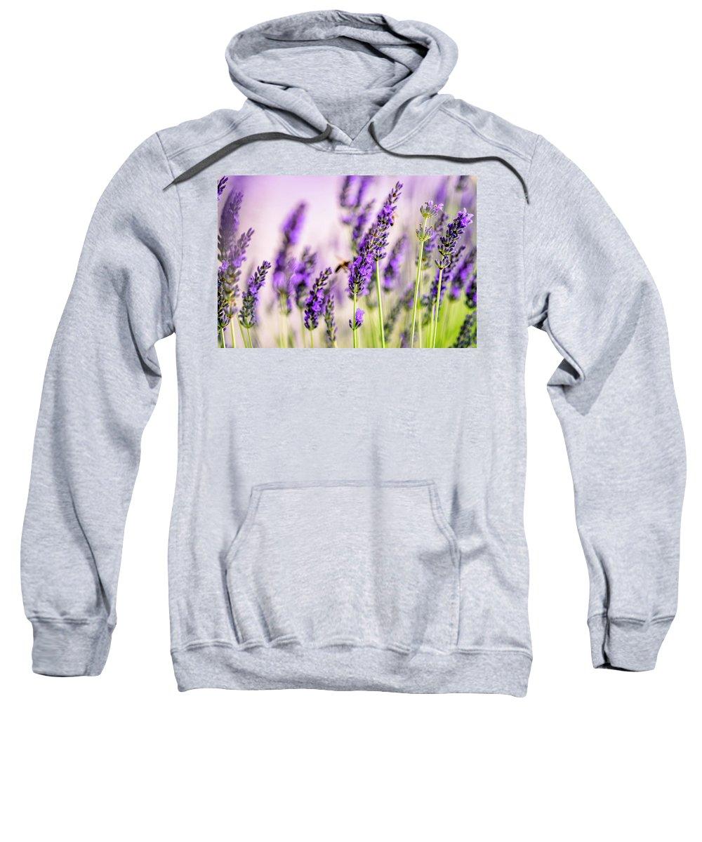 Lavender Sweatshirt featuring the photograph Summer Lavender by Nailia Schwarz