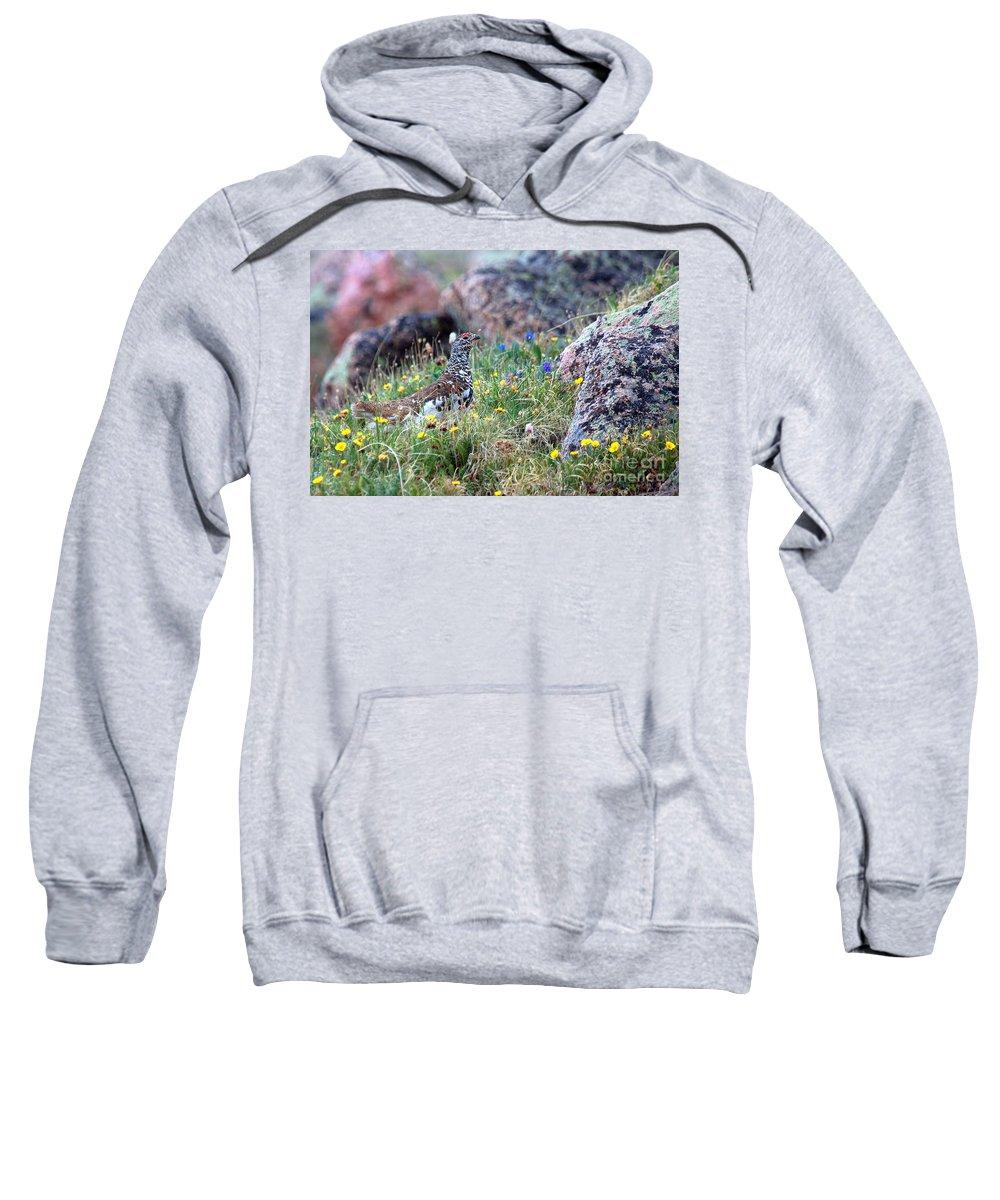 Ptarmigan Sweatshirt featuring the photograph Summer Ptarmigan by Jim Garrison