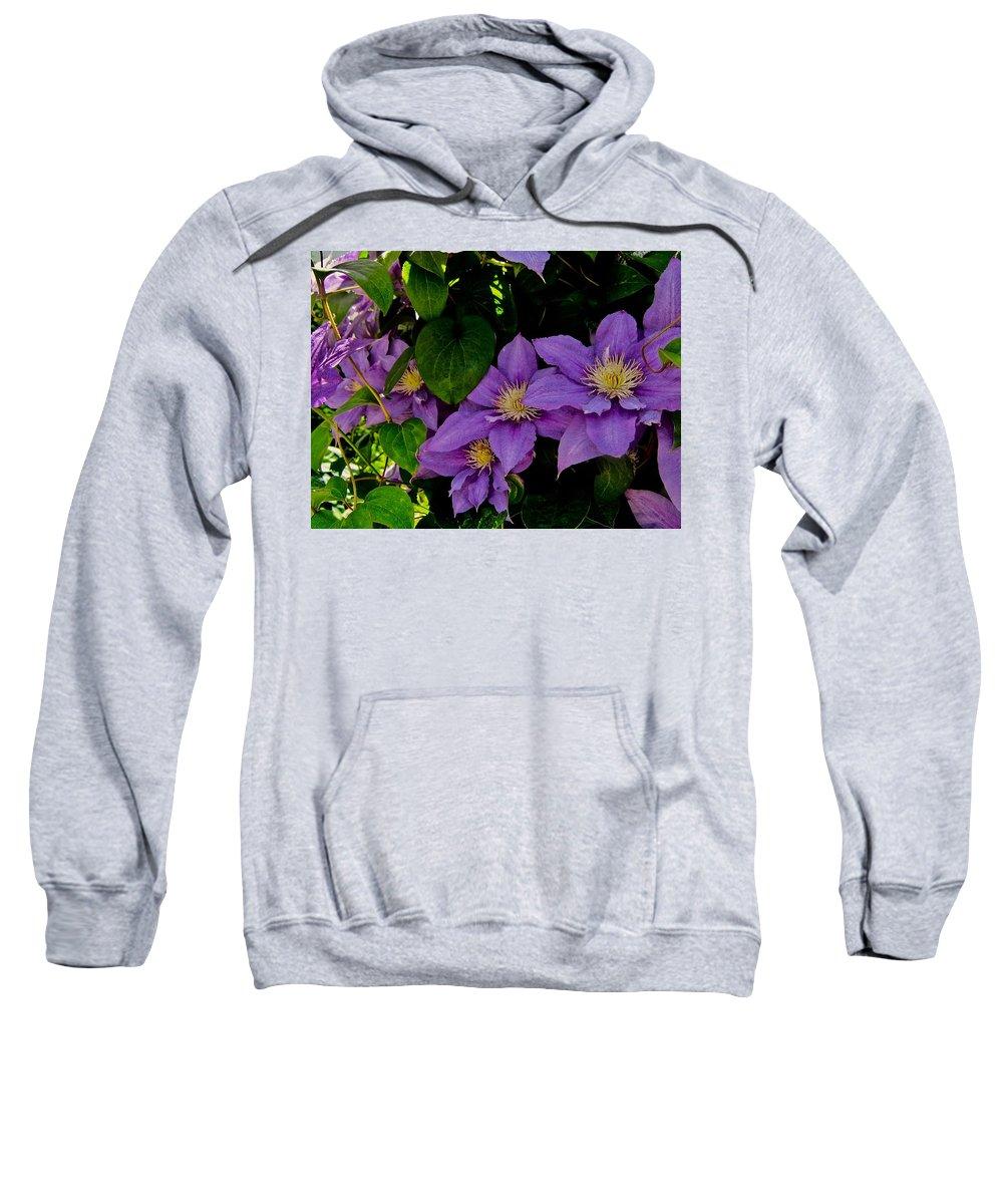 Clematis Sweatshirt featuring the photograph Summer's Gone by Elizabeth Tillar