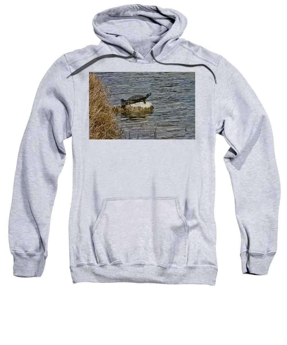 Turtle Sweatshirt featuring the photograph Sun Bathing Stone by Deborah Benoit
