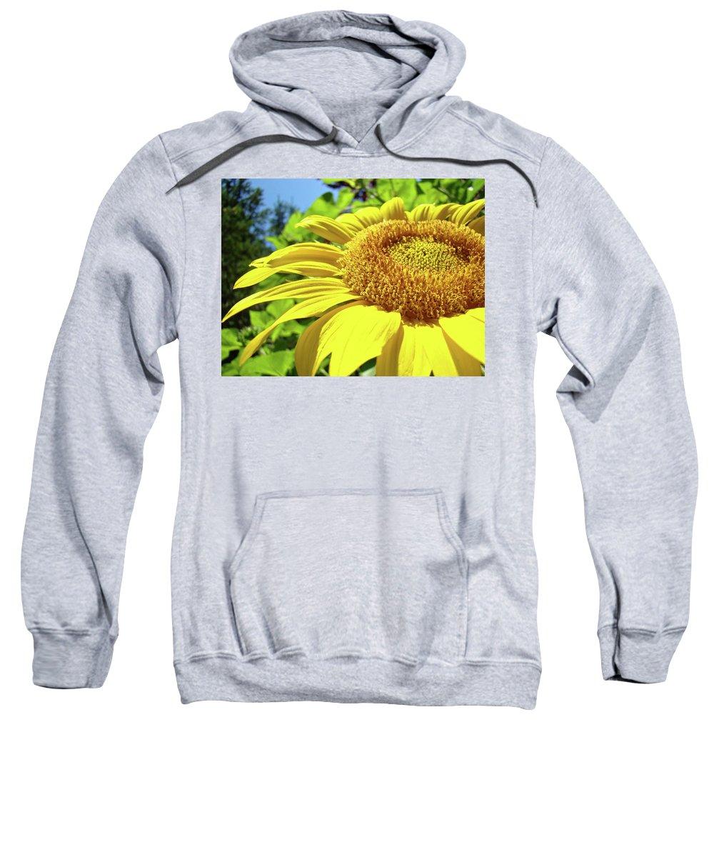 Sunflower Sweatshirt featuring the photograph Sun Flower Art Sunlit Sunflower Giclee Prints Baslee Troutman by Baslee Troutman