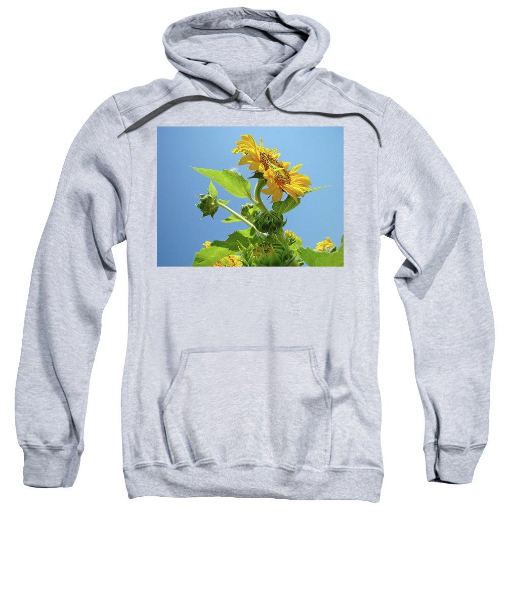 Sunflower Sweatshirt featuring the photograph Sun Flower Artwork Sunflower 5 Giclee Art Prints Baslee Troutman by Baslee Troutman