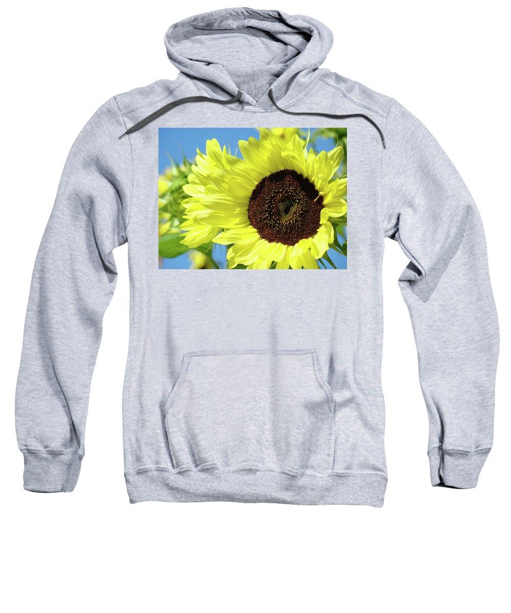 Sunflower Sweatshirt featuring the photograph Sun Flower Garden Art Prints Sunflowers Baslee Troutman by Baslee Troutman