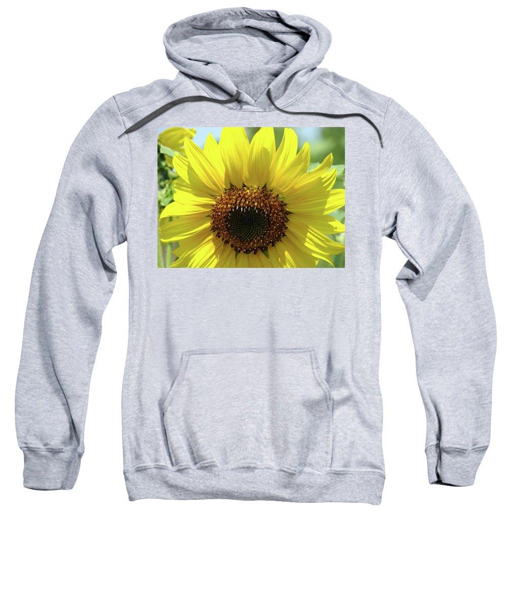 Sunflower Sweatshirt featuring the photograph Sun Flower Glow Art Print Summer Sunflowers Baslee Troutman by Baslee Troutman