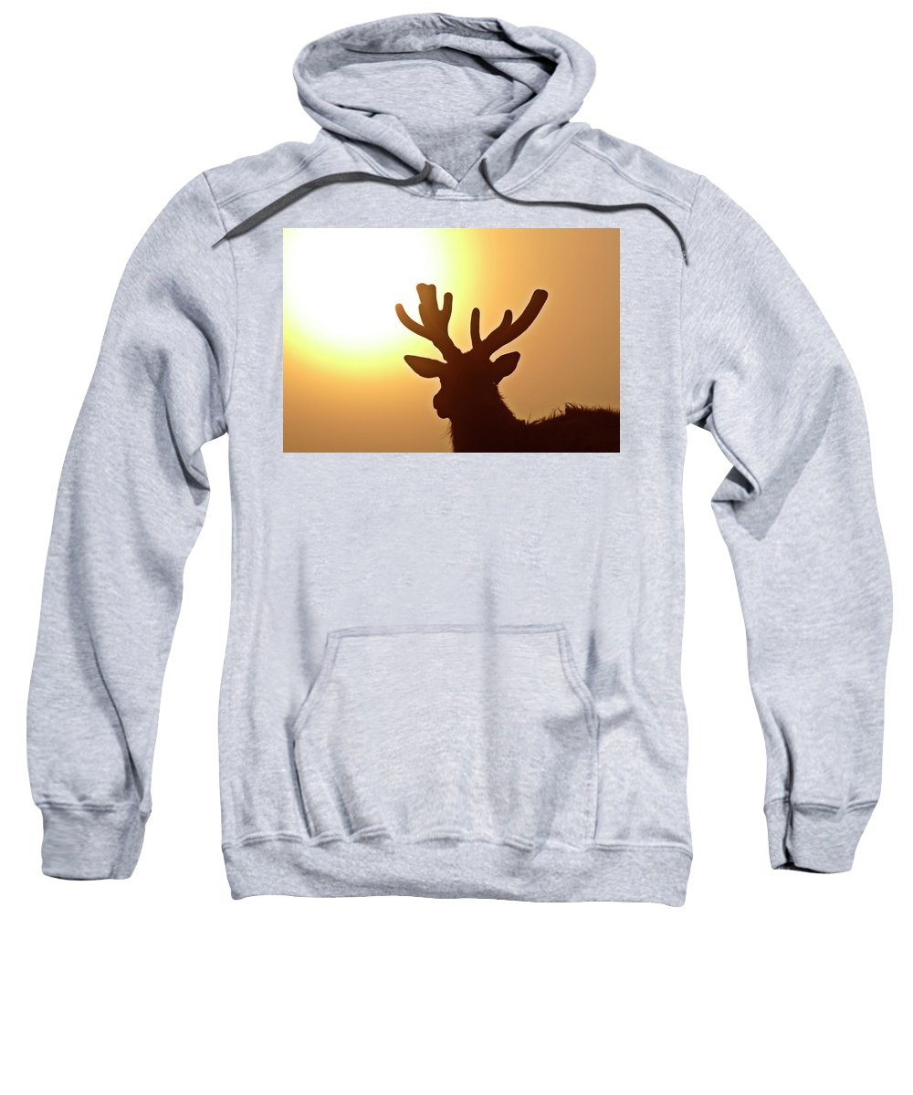 Elk Sweatshirt featuring the digital art Sun Glaring Over A Bull Elk by Mark Duffy