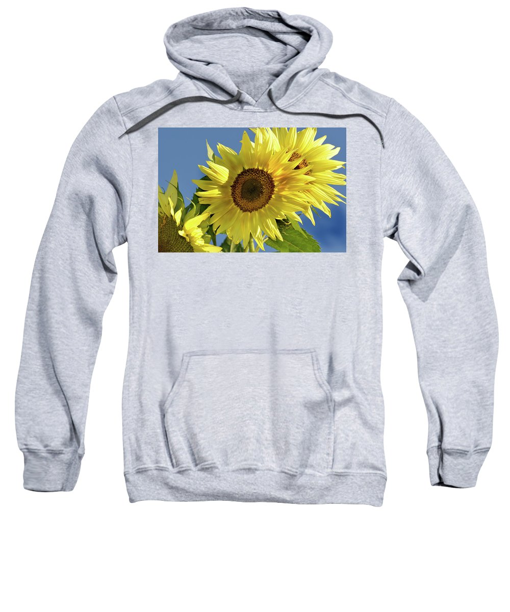 Flower Sweatshirt featuring the photograph Sunflower Face by Barbara Treaster