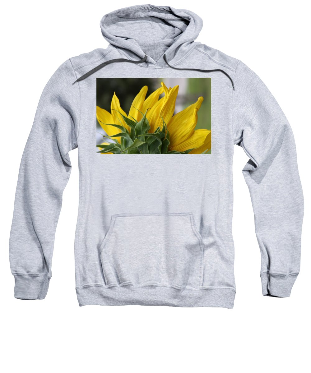 Sunflower Sweatshirt featuring the photograph Sunflower by Jill Smith
