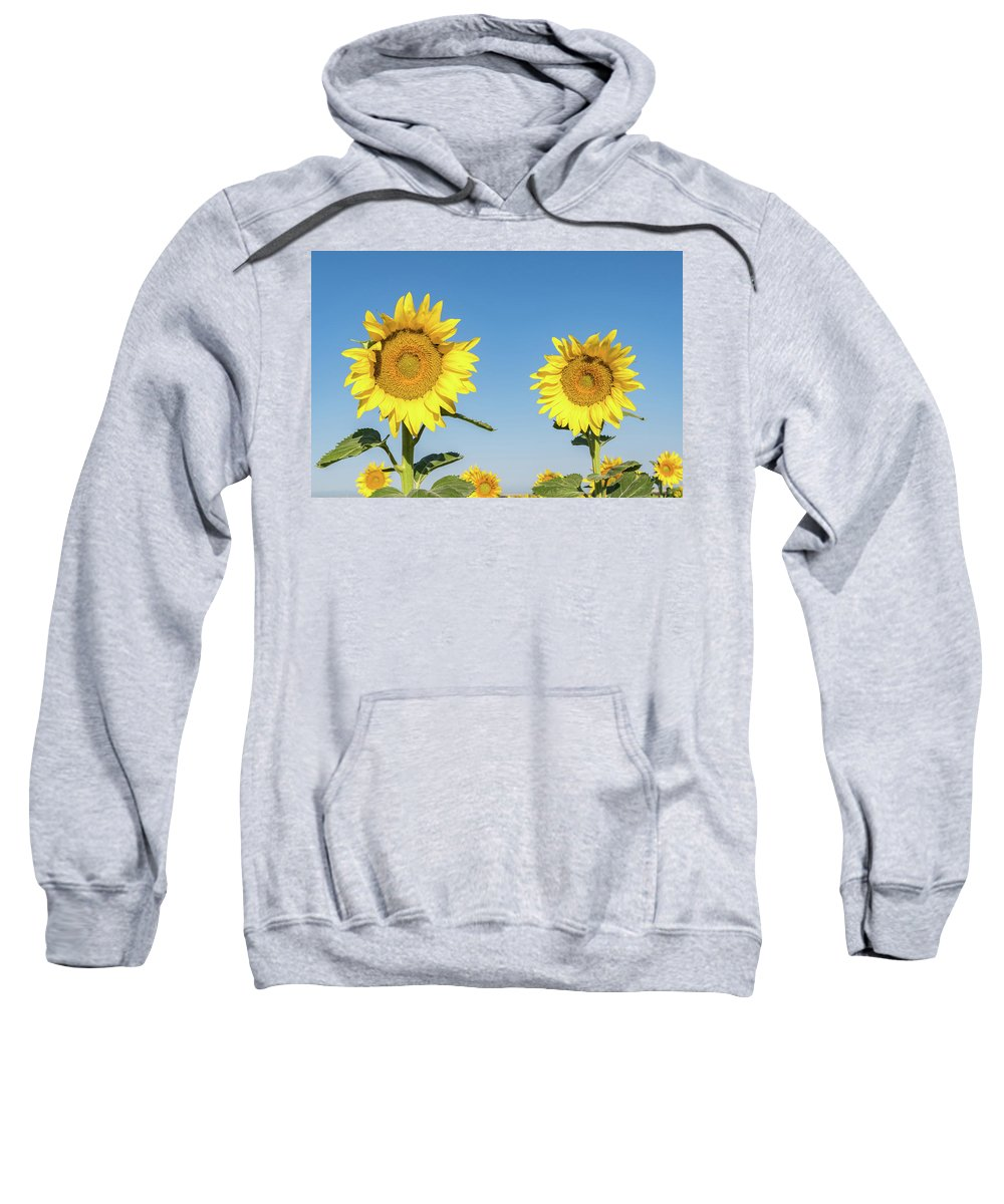Sunflowers Sweatshirt featuring the photograph Sunflower Pair by Chris Augliera