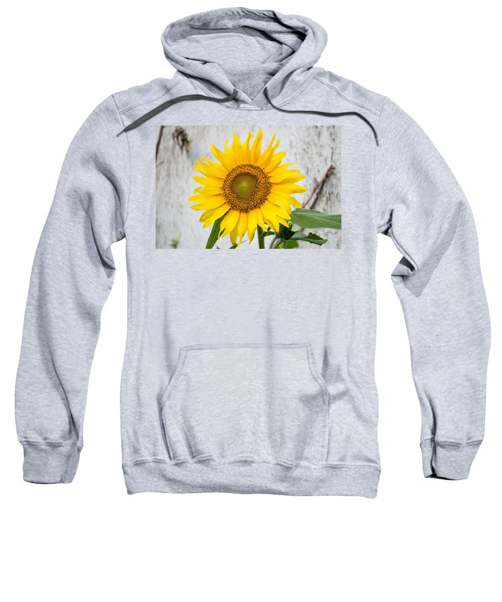 Nature Flower Sweatshirt featuring the photograph Sunflower by Sainuddeen Alanthi