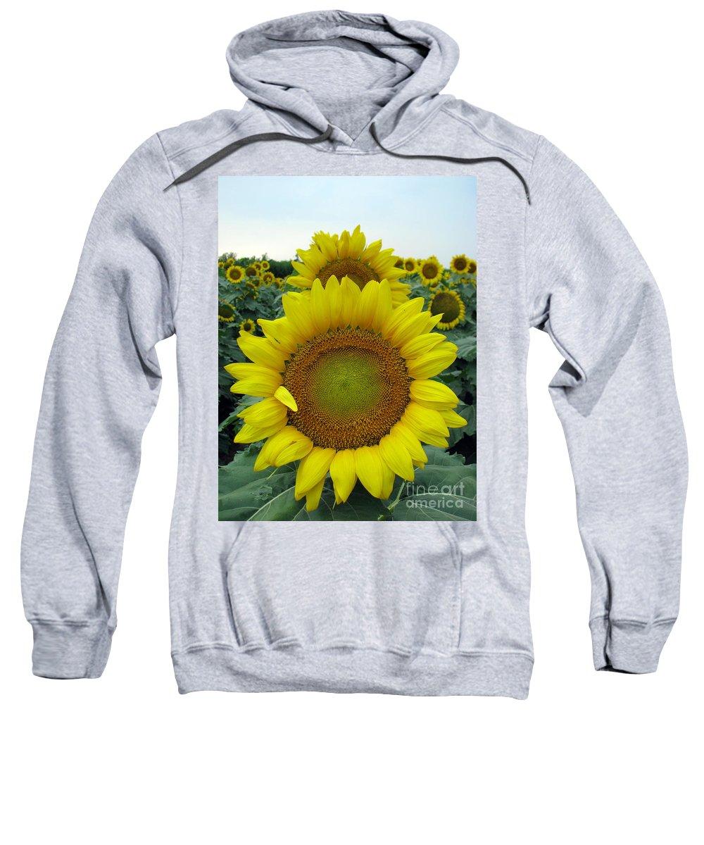 Sunflowers Sweatshirt featuring the photograph Sunflowers by Amanda Barcon