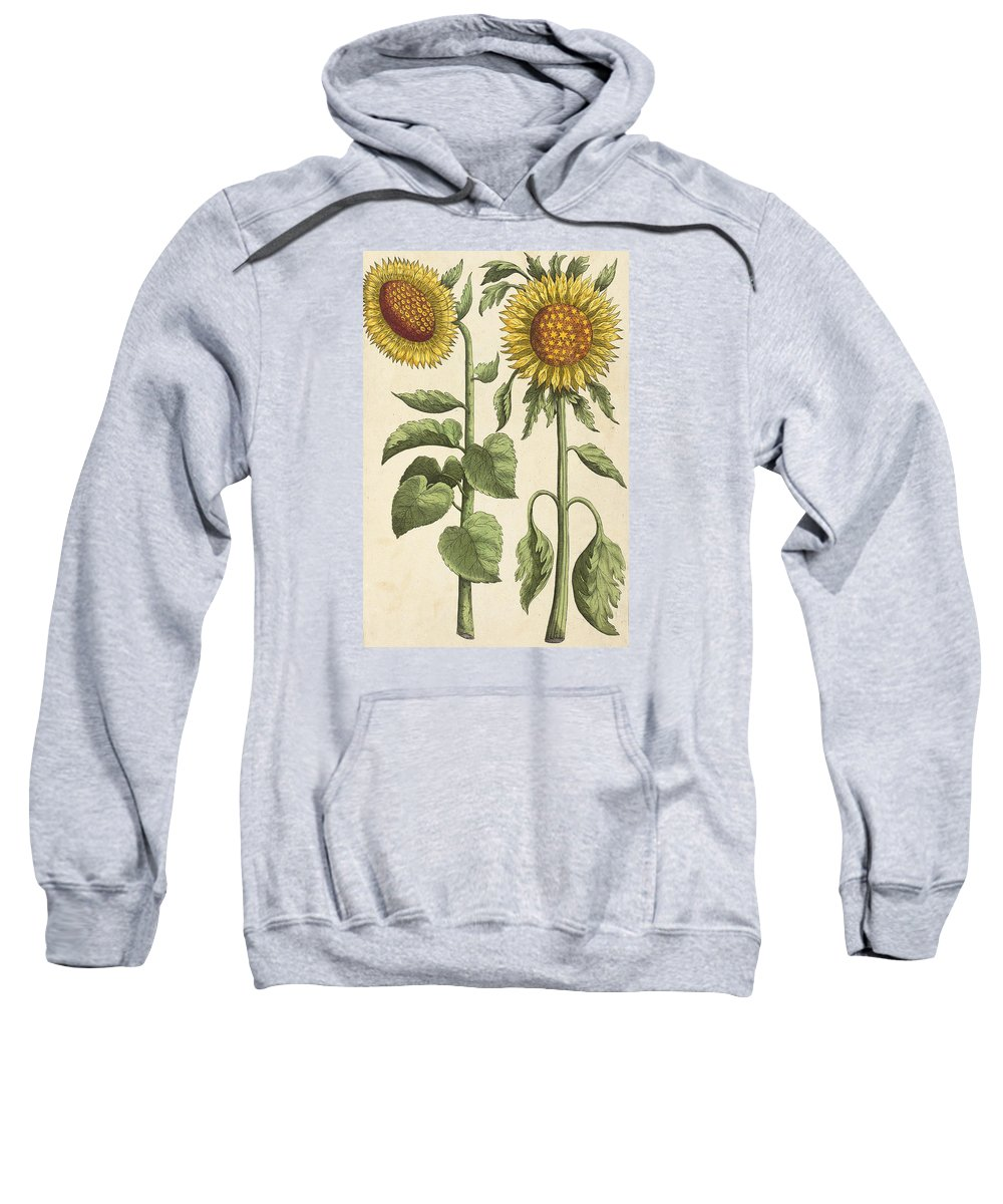 Sunflower; Sunflowers Sweatshirt featuring the drawing Sunflowers Illustration From Florilegium by Emanuel Sweert